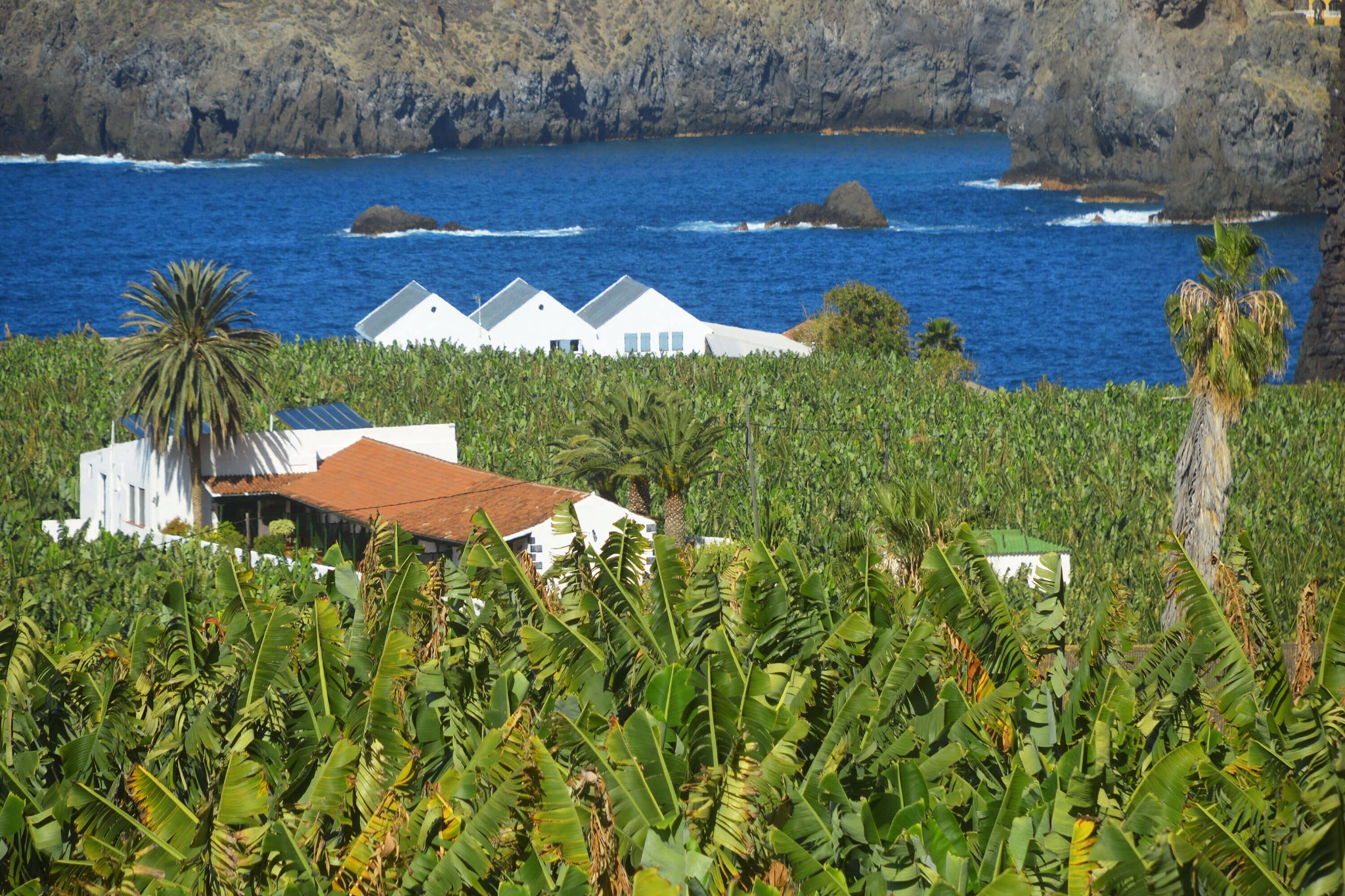Traditional canarian house for rent for 6 people. It is located in the middle of a banana plantation next to the ocean
